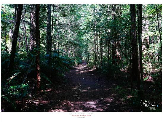 뉴질랜드 여행 - 하늘을 걷는 기분이 드는 로토루아 레드우드 숲 (RedWoods Treewalk)