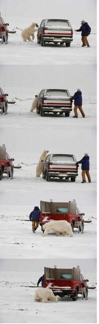 곰을 만났을때 죽은척 하는것은?