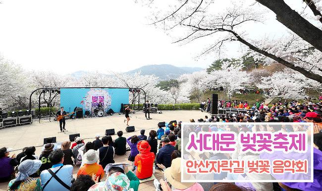 [벚꽃축제] 2017년 서대문 안산자락길 벚꽃 음악회! 서대문 안산 벚꽃길 함께 걸어요
