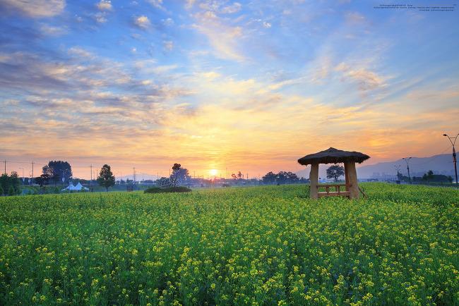 구리한강시민공원 유채밭 일출