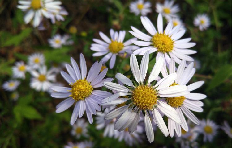 [포토에세이] 들꽃에서 나는 향기, 내 인생의 동반자입니다/들꽃 이야기