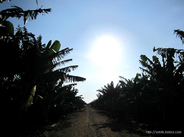 호주 lakeland 바나나 농장 졸업