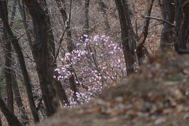 [토요산행] 수리산 180331