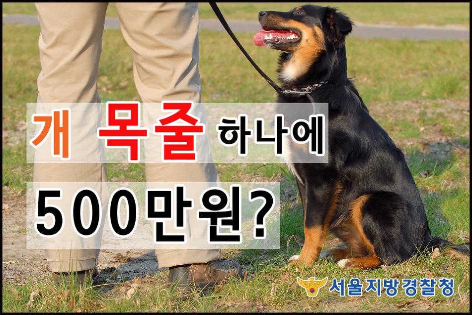 개 목줄 하나에 500만 원?