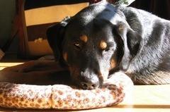 SALTY'S DOG & CAT SHOP