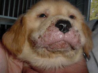 Do Dogs Have  Eyelids