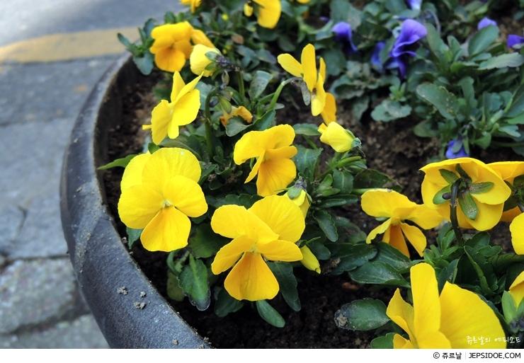 화단의 꽃
