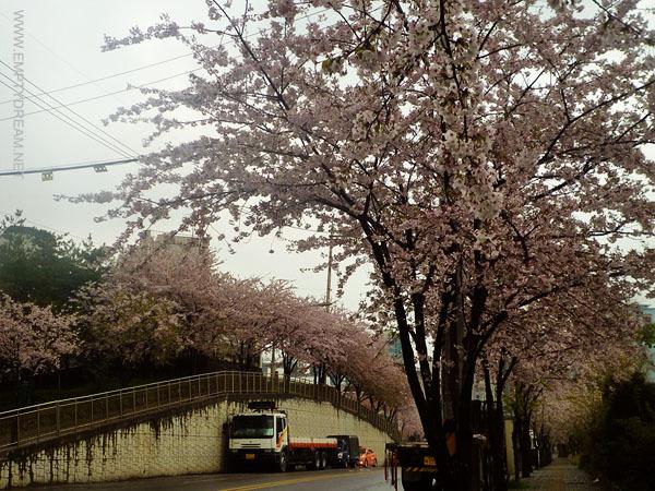 당인리 발전소 벚꽃길 (서울화력발전소)