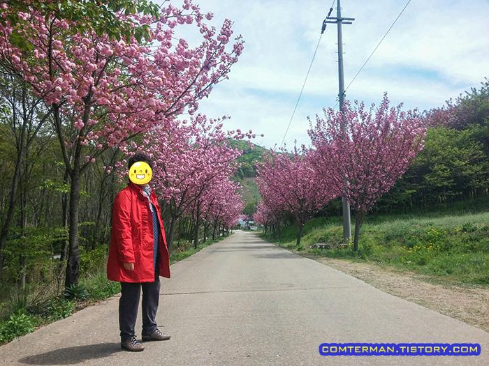 문수사 왕벚꽃길