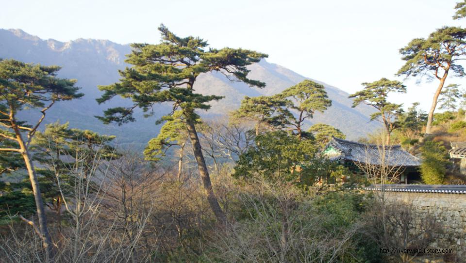 자장암(慈藏庵)과 천년노송(千年老松)