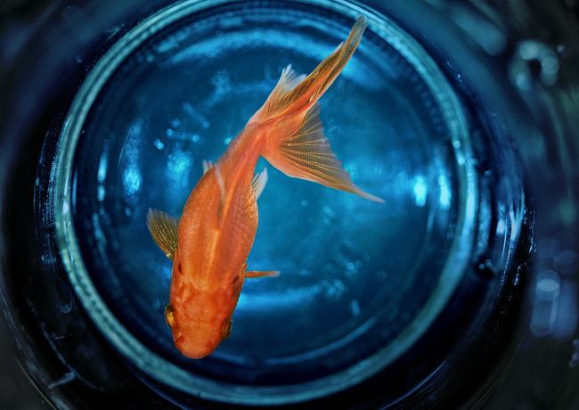 사물사진,금붕어,goldfish