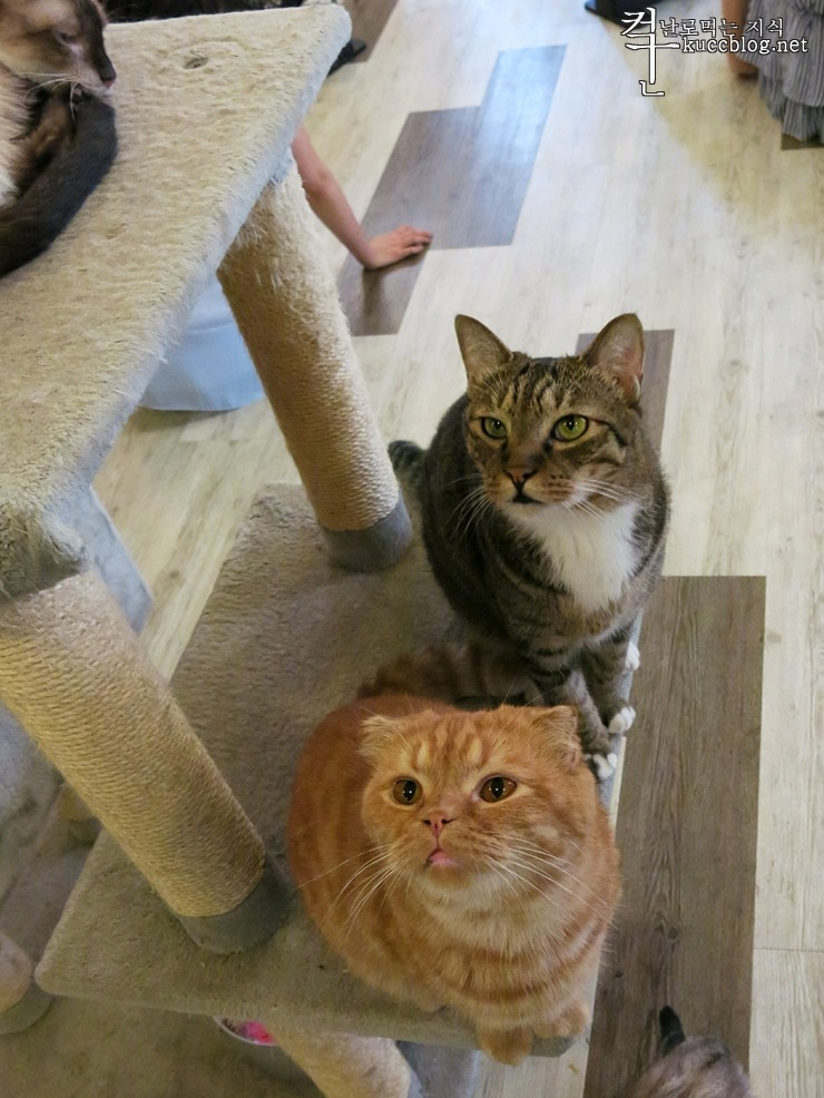 고양이, 고양이 카페, 고양이 다락방, 고양이 사진, 반려동물