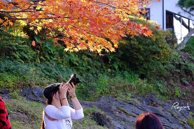 겐비케이에서 단풍을 촬영하던 여인