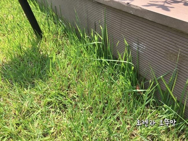 보쉬 충전용 잔디깎기! 모서리 잔디가 시원하게 제거되네15
