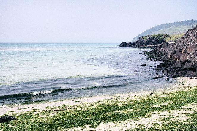함덕서우봉해변