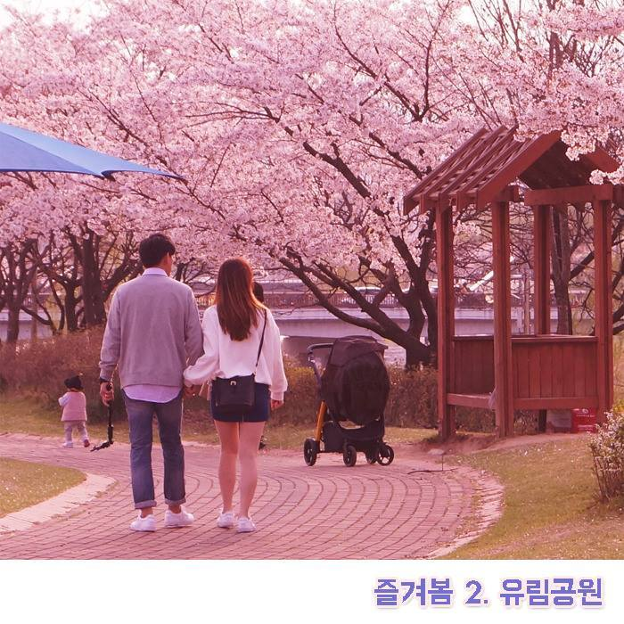 유림공원 벚꽃