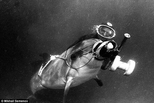 전투돌고래 military dolphin