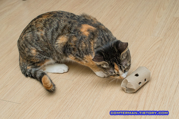 고양이 축구 간식통