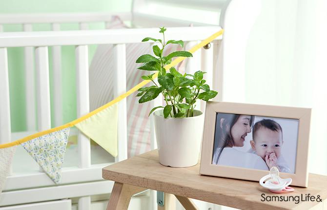 화분 꽃 아기사진
