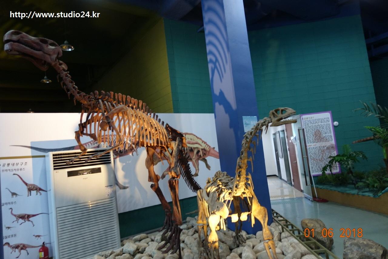 공룡 화석2