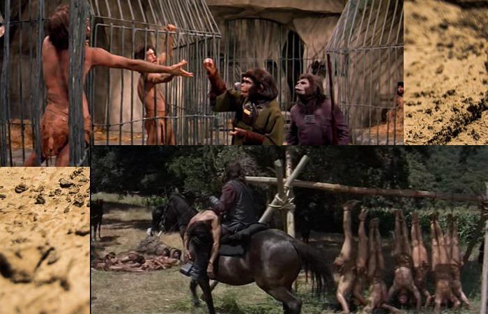 사진: 혹성탈출 원작에서 인간들은 짐승 대접을 받았다. 현재 우리가 원숭이들을 사육하고 구경하듯이 유인원들은 인간을 사육했던 것이다. [혹성탈출 시리즈 - 혹성탈출1의 줄거리와 결말]