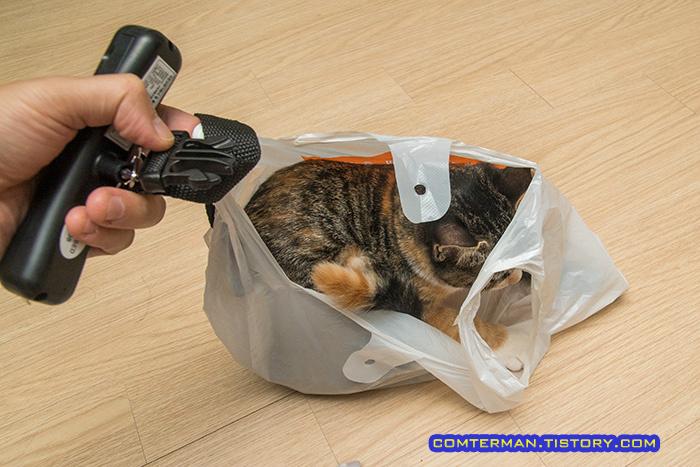 고양이 몸무게 측정 방법