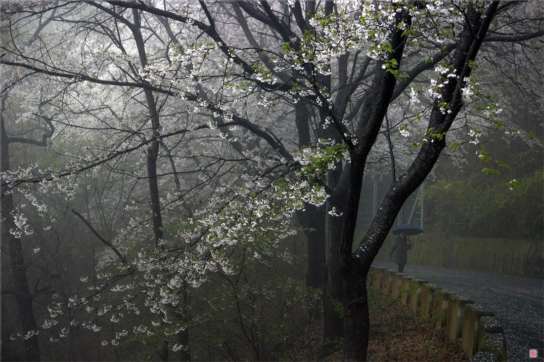 [삼성NX500] 비 내리는 봄