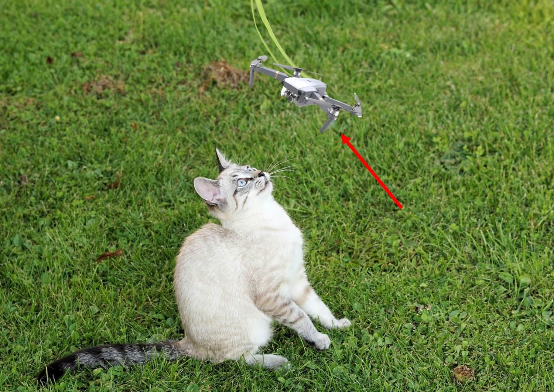 고양이, 드론