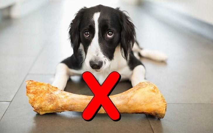 강아지에게 더이상 뼈다귀 간식을 주면 안되는 이유