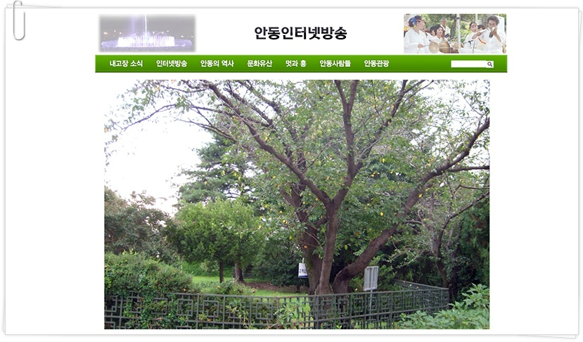 사진: 연리지 나무는 안동역 명소로 사랑하는 연인들의 관광지가 되었었다.