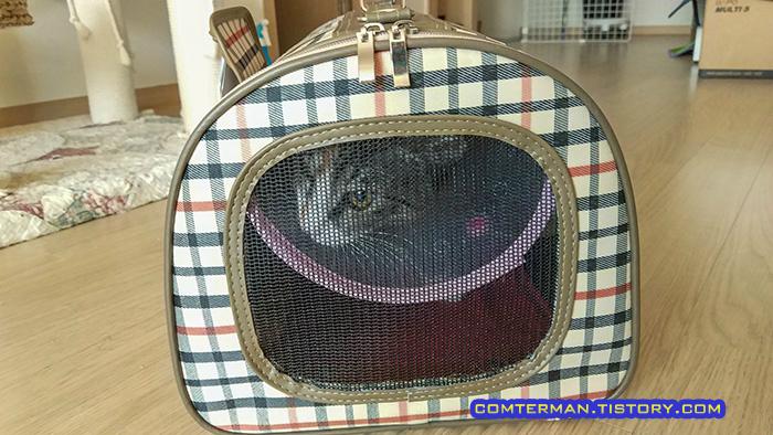 고양이 이동장