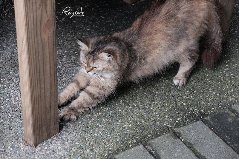 허우통 고양이 마을 길고양이