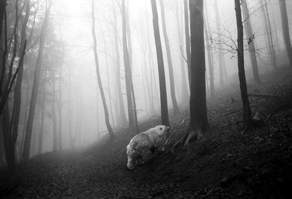 포토샵으로 자유가 된 동물들11