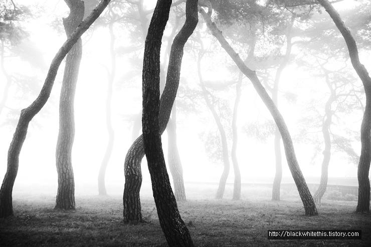 소나무 공원