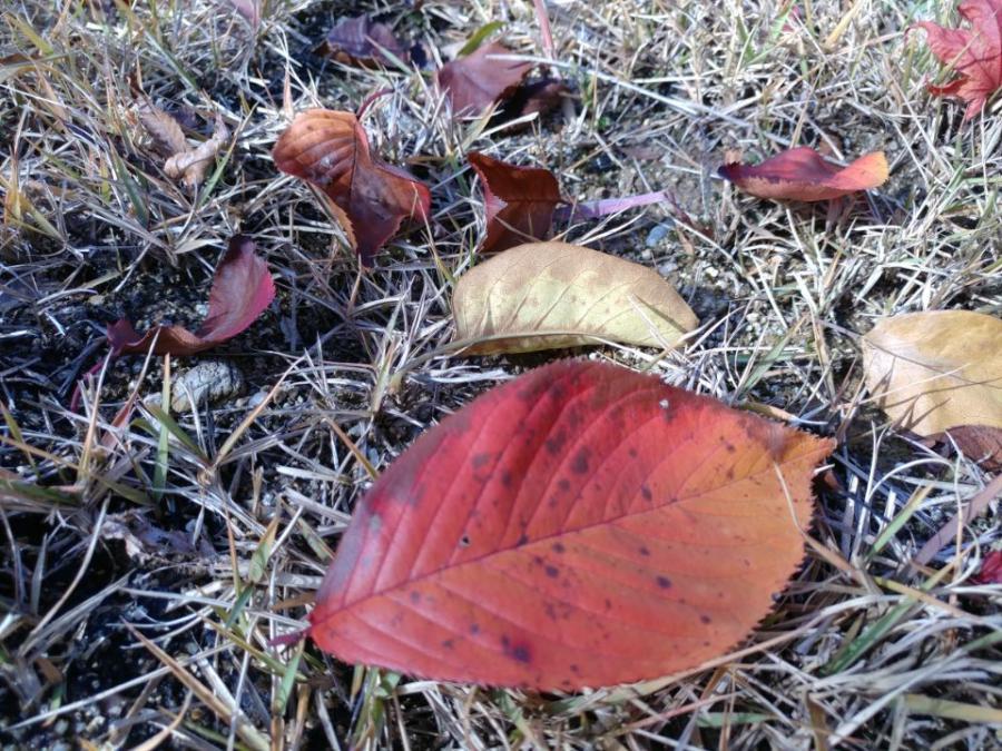 가을을 보내기 싫어요.