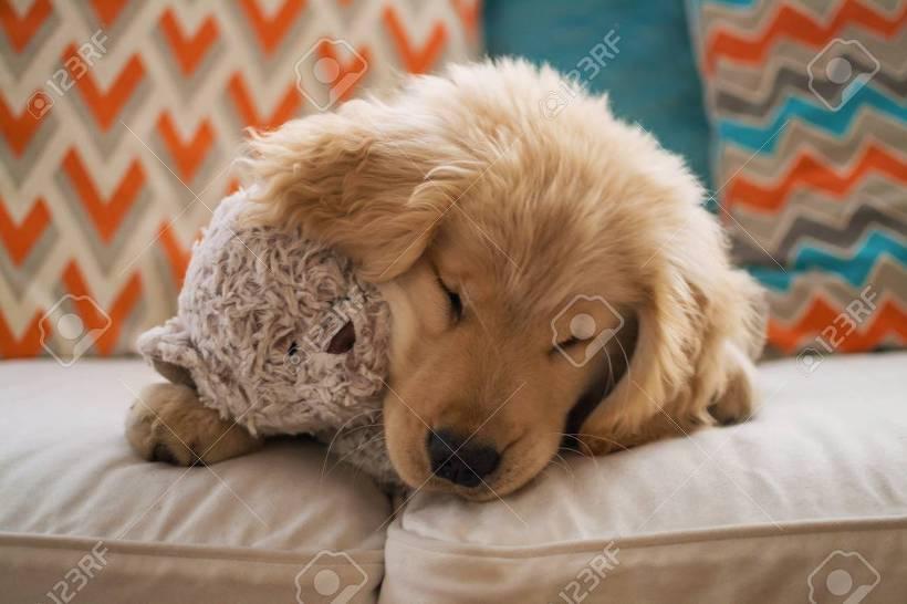 자는 강아지